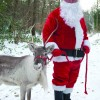 Father Christmas and his reindeer at Holt Country Park